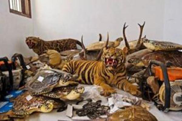 野生动物制品