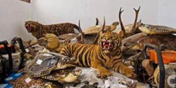 海关破获一起走私野生动物制品大案