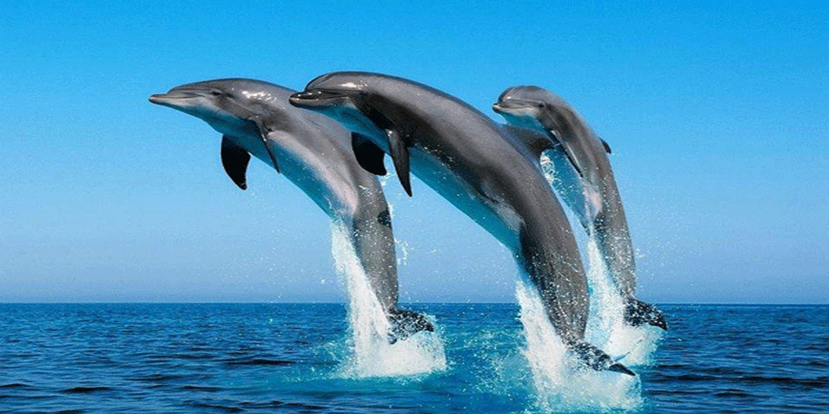 法国将如何解决海豚种群保护问题