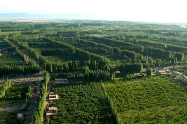 全国春季造林4742.97万亩