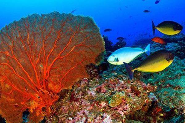 加勒比珊瑚礁