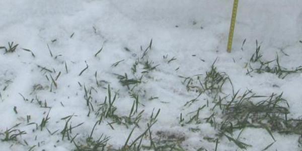 预计三月北方冬麦区水热条件好