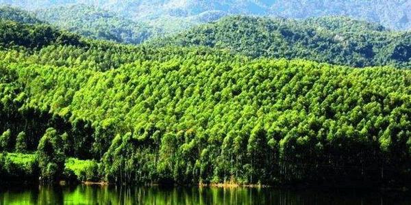 就天然林保护问题进行约谈