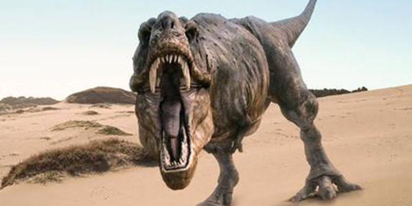 中美加科学家发现有史以来最小恐龙