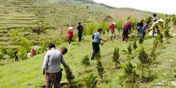今年北京市将绿化造林20万亩