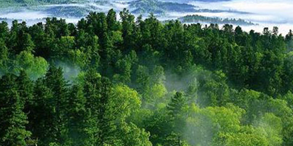 我国森林覆盖率近23%