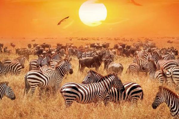 野生动物保护
