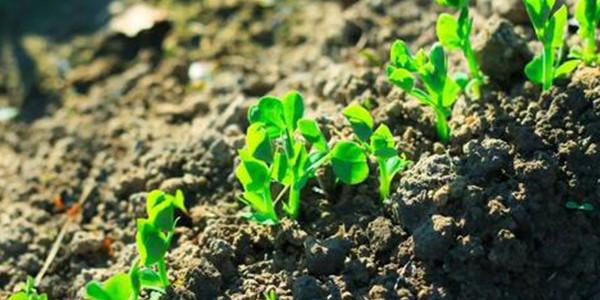 土壤污染防治花钱不多也能解决问题