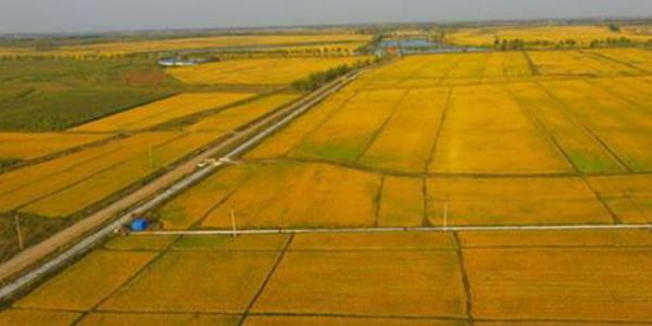 土地整治制度建设及土壤修复技术探讨