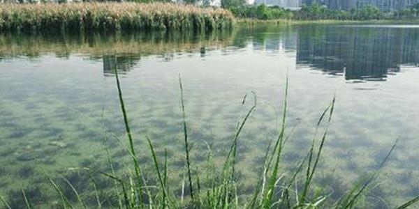 水生态修复如何调理?