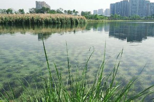 水生态修复