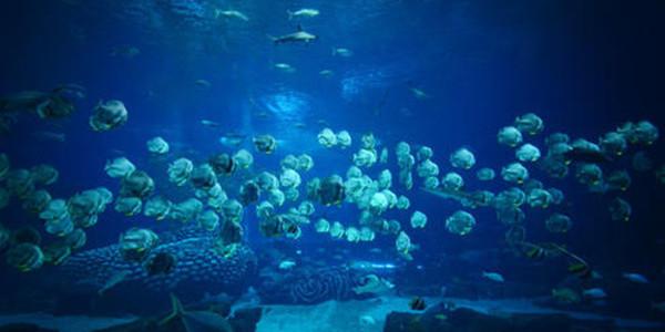 海洋环境保护主要存在两方面问题