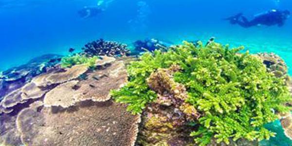 """公益诉讼筑起海洋生态""""保护盾"""""""