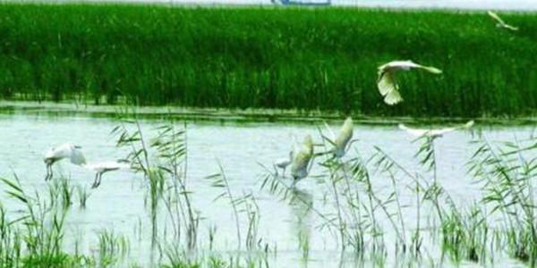 促进东平湖生态保护和高质量发展