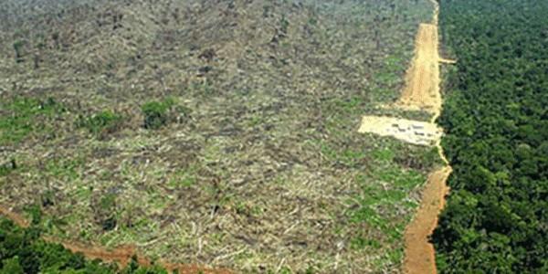 """""""地球之肺""""遭砍伐 20%亚马孙雨林不吸碳反而更排碳"""