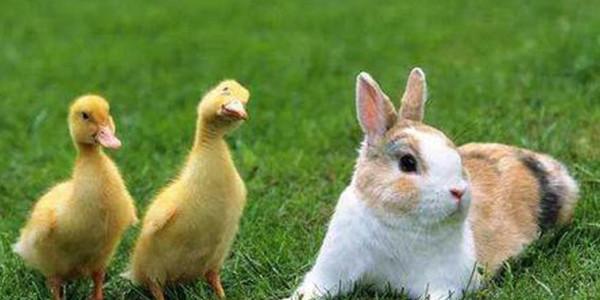 河北立法禁止食用陆生野生动物