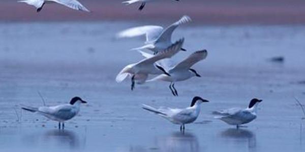 山西划定生物多样性保护优先区域
