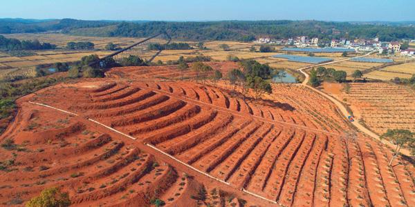 江西探索如何利用红壤丘陵来实现生态修复