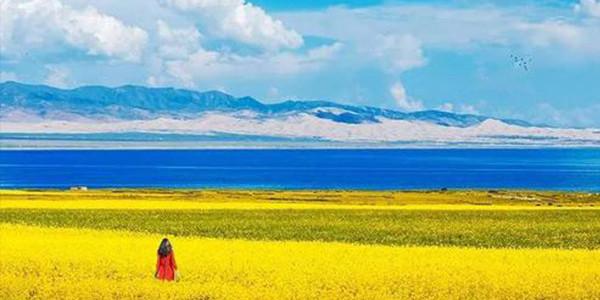青海草原植被盖度达57%