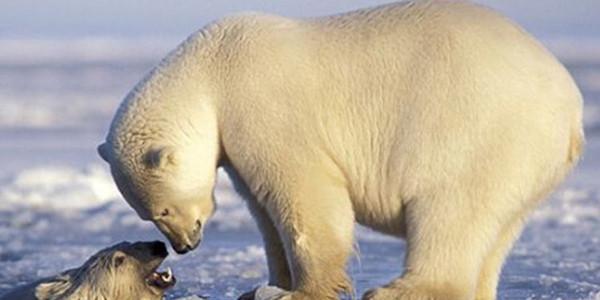 生物多样性保护系列开展了哪些活动?