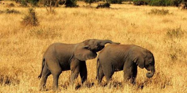 全面禁止非法野生动物交易 革除滥食野生动物陋习