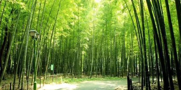 四川青神:竹产业成了绿名片